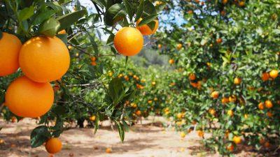 Compra on-line de naranjas